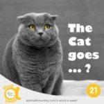 un gatto blu russian con occhi gialli e la scritta su come si dice miagolare in inglese